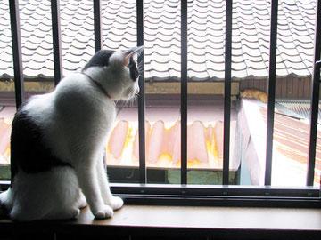 家族のある猫と自由のある猫