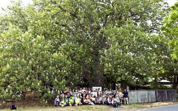 茨島のトチ1本の巨木が森のようです