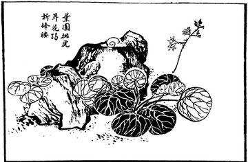 Plante de Kin-seu-ho-ye