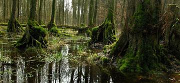 Erlenbruchwald Volksinitiative Artenvielfalt Insekten retten Artenschwund stoppen NABU Düren