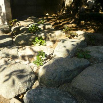 既存庭石を使用