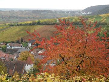 Herbstliche Farbenpracht leuchtet auch an grauen Tagen