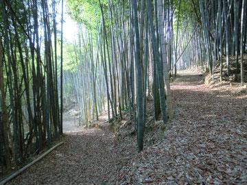 自然環境学習の森