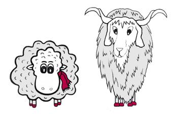 Grace O 'Sheep mit dem Kaschmir Ziegenbock