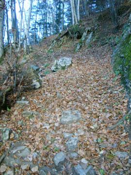 Le chemin grimpe à travers bois