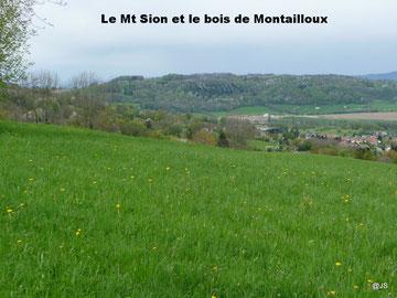 Le bois de Montailloux sur le Mt Sion