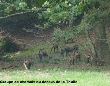 Groupe de Chamois à La Thuile
