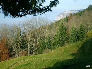 L'alpage de la Thuile : les premiers mètres de la descente