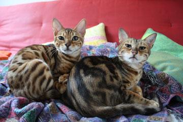 Baxter (auf dem Foto links) heißt jetzt Miles und wohnt mit seiner Freundin Marani in Aachen.