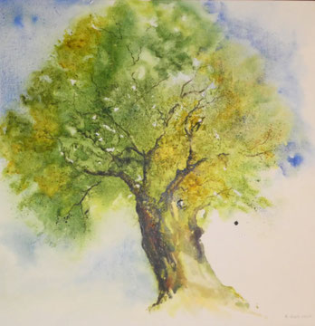 Olivenbaum Nr. 2, Aquarell auf Leinwand, 70 x 70 cm, Beatrice Ganz