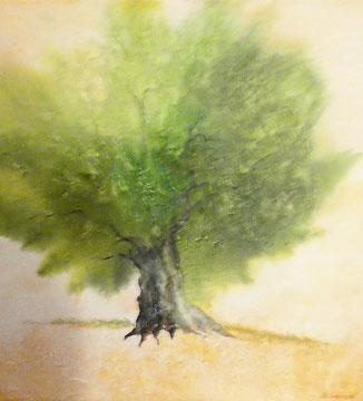 Olivenbaum Nr. 5, Aquarell auf Leinwand, 70x70, Beatrice Ganz, 2018