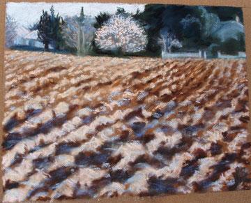 Le premier amandier, pastel 27x21 Sylvie Berman artiste peintre