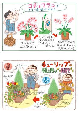 ガーデニング 園芸 農園 育て方 胡蝶蘭 チューリップ 植え付け