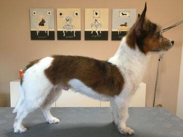 Kleiner Terrier-Mix von Hand getrimmt  - Hundesalon Plisch & Plum
