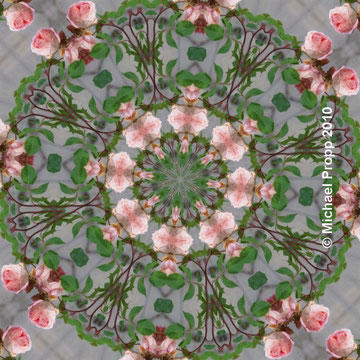 Mandala Rosen
