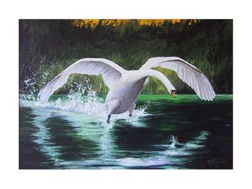 Planing swan    70x50 cm  2004