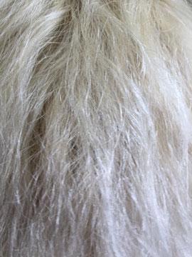 Ohne Rundbürsten und GHD Styler sehr schwer zu bändigen. Ich kenne Ihre Haare wirklich in und auswendig. Außerdem sind die Haare gefärbt und gesträhnt.