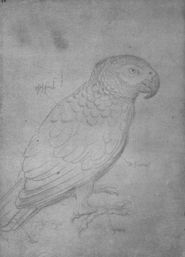 Papagei, am Bodens sitzend