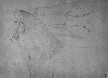 Studienblatt mit Pferdekopf [1]