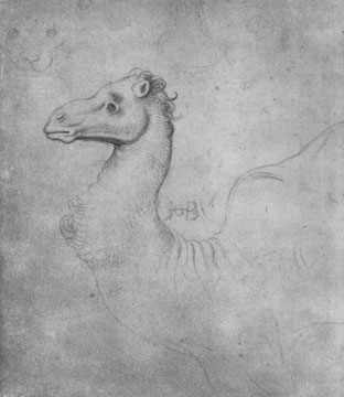 Kopf eines Dromedars