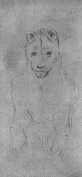 Kopf einer Löwin