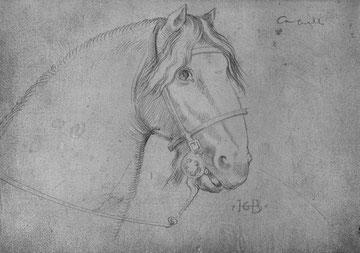 Studienblatt mit Pferdekopf [2]
