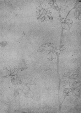 Blütenstengel