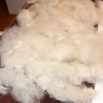 mit Karden gekämmte Wolle