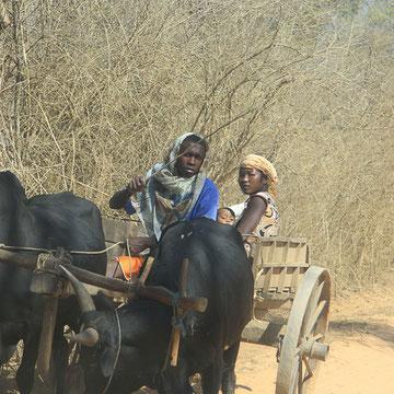 Piste nach Belo sur Tsiribihina