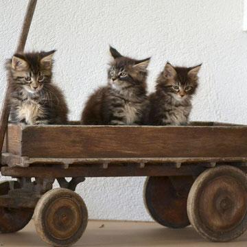 bébés Ofélia Jimmy, Java, Jessy