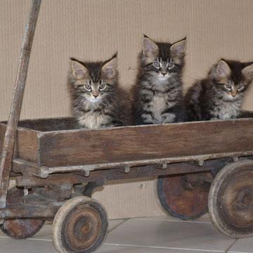 bébés Ofélia: Java,Jimmy, Jessy