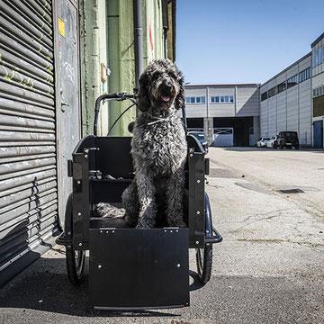 Cargobike Classic Dog
