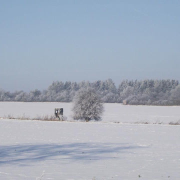 Die herrliche Winterlandschaft