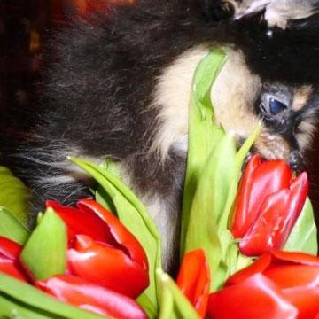 Ой сколько цветочков мне подарили.. А какие они вкусные..ммм