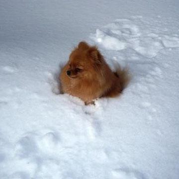 Оставили бедную несчастную собачку в снежном поле..