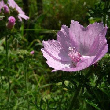 16.06.2011 - Im eigenen Garten