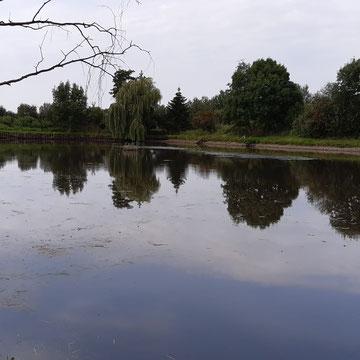 Zu diesem Zeitpunkt hatte der Teich noch etwas Wasser