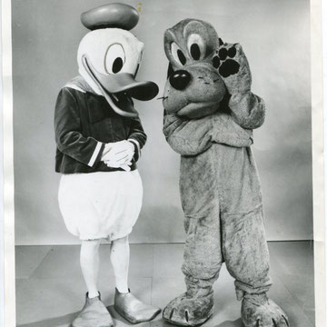 "ref G21-   20,5x25,5cm - ""Donald duck and Goofy"" - Presse: tampon chicago daily news et  article au dos - 1972 - 4/5"
