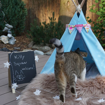 Katzenmädchen Kasi auf Entdeckungstour