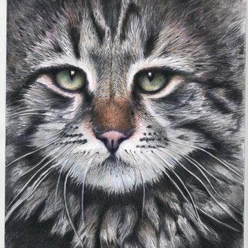 Katze Buntstift 12.2012  30x21   verkauft