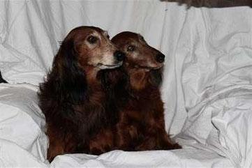 Die Geschwister Dixie und Dusty im hohen Alter