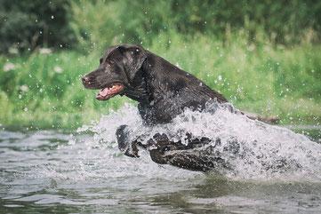 Gassishooting Dauerbrenner - Hund spielt im Wasser | Tierfotograf