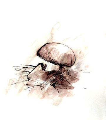 Pilz, Zeichnung, Braun, Tinte laviert