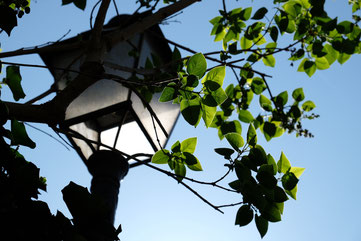 Campagne à Paris lampadaire