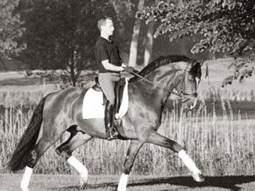 De Chirico (v. Dolany) Gek. Holst. ,Grand Prix erfolgrich