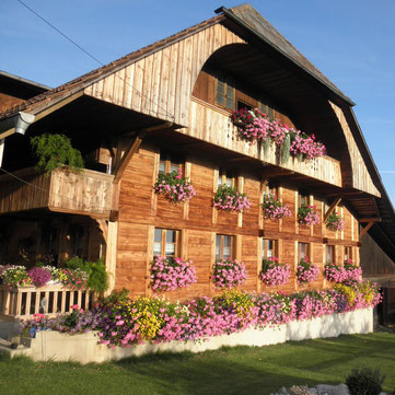 Chodenländerzucht,Belted-Galloway,Gebirgspferde Kanton Bern