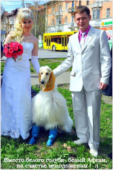 Хоган на свадьбе :)