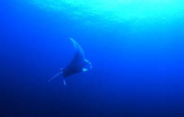 プーケットの青い海