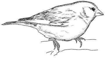 зеленушка - a greenfinch, издательство ЛИСТОС