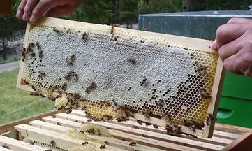 Honig enthält unglaubliche 200 Inhaltsstoffe